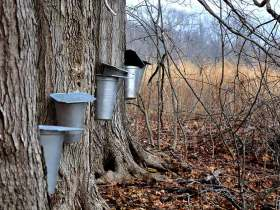 trees-with-buckets