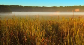 McCloud-Prairie-Morning-mist