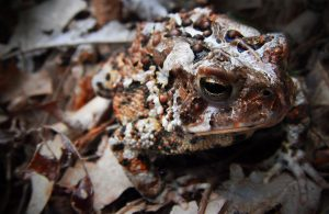 Toad Abodes @ Plainfield | Indiana | United States