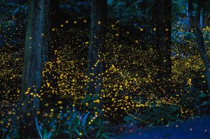 Firefly Night Hike @ McCloud Nature Park | North Salem | Indiana | United States