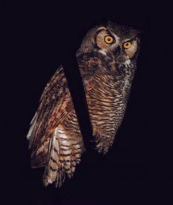 Five Senses Night Hike @ McCloud Nature Park | North Salem | Indiana | United States