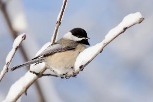 Winter Bird Feeders - 1 p.m. @ McCloud Nature Park | North Salem | Indiana | United States