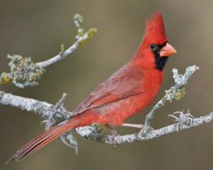 Christmas Bird Count @ McCloud Nature Park