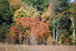 Tree Leaf ID Hike @ Sodalis Nature Park