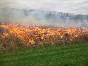 Why Burn the Prairie? @ McCloud Nature Park